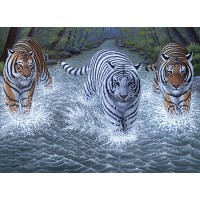 Royal & Langnickel Painting by Numbers 11 1/4 x 15 3/8 Junior Large Set Three Tigers