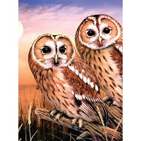 Royal & Langnickel Painting by Numbers 8 3/4 x 11 3/8 Junior Small Set Tawny Owls